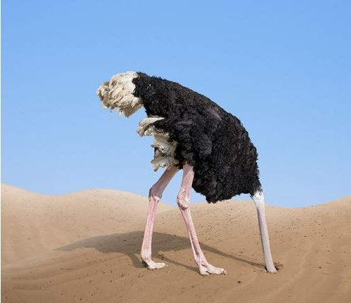 """Encare sua vida financeira de frente e evite o """"efeito avestruz"""""""