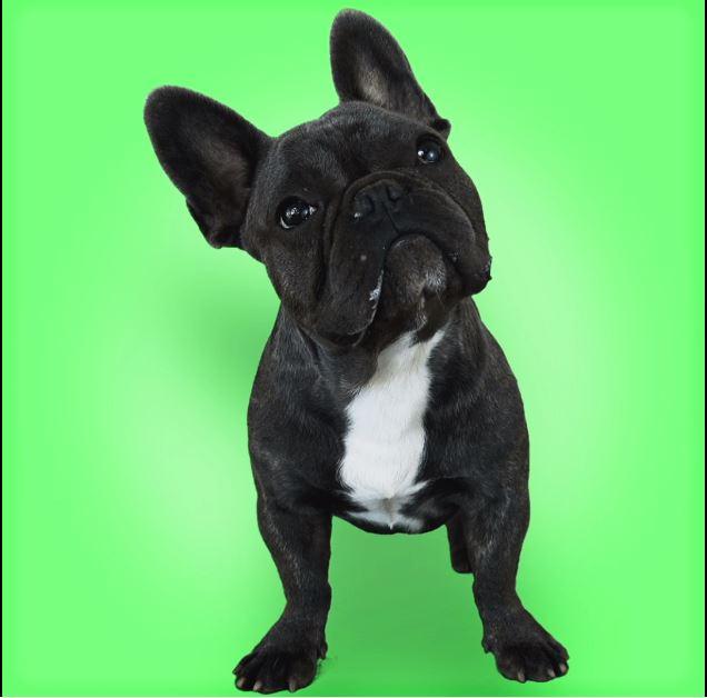 Convênio para animal de estimação: vale a pena investir em um?
